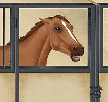 agressivité envers les humains d'un cheval au box