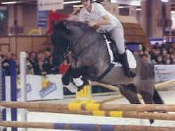 Poney Highland en saut d'obstacle