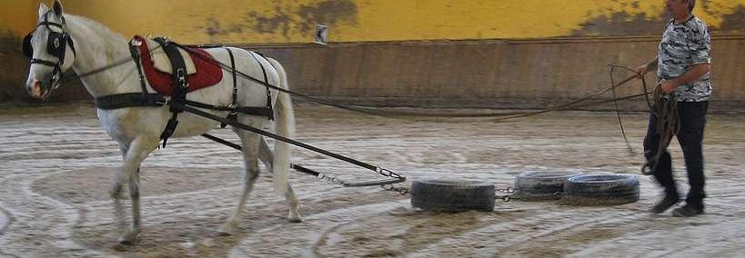 Séance de débourrage avec mise en traction avec le pneu