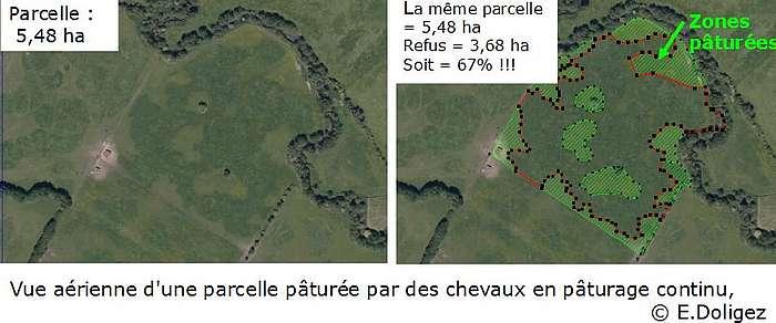 Vue aérienne d'une parcelle pâturée par les chevaux