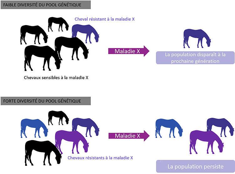 Schéma de la résilience d'une population équine