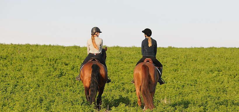 Balade à cheval en extérieur