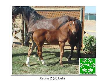 Ratina Z (cl) beta
