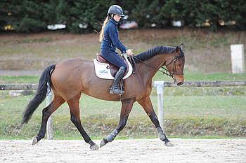 fonctionnement du dos du cheval au trot