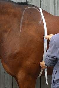 Périmètre thoracique mesuré avec un ruban barymétrique