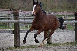 bien-être du cheval au repos