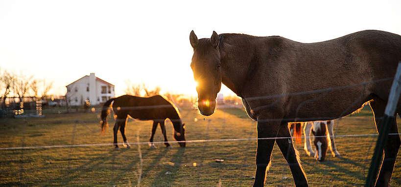 chevaux près d'une habitation © Pixabay