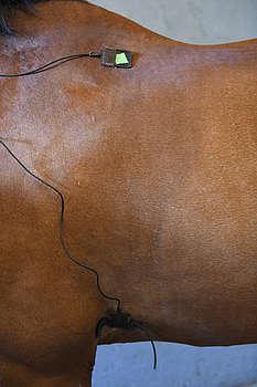 Emplacement des deux électrodes d'un cardiofréquencemètre