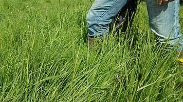 Valorisation de l'herbe, hauteur 20 cm