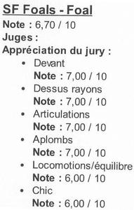 Grille de jugement d'un foal Selle Français