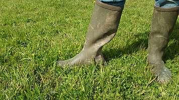 Valorisation de l'herbe, hauteur 5 cm