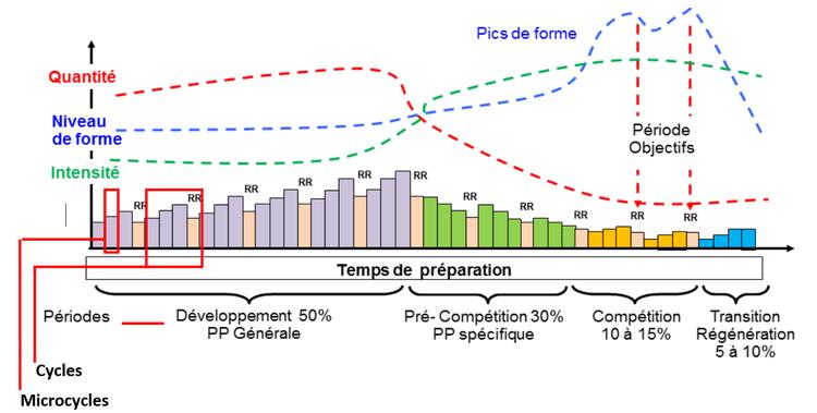 planification pour la préparation d'un objectif avec périodes, cycles, microcycles et alternance travail / repos relatif.