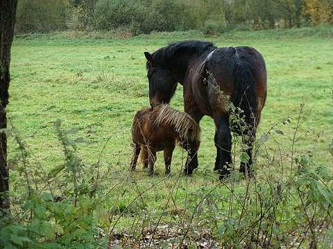 monde sensoriel du cheval
