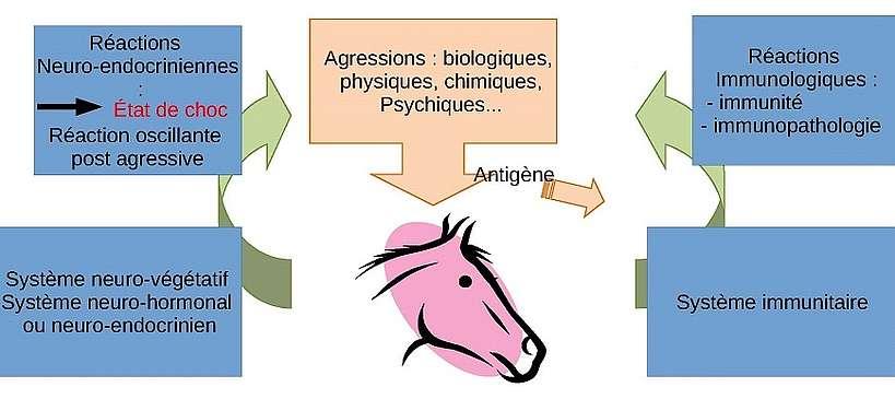 maladies définitions