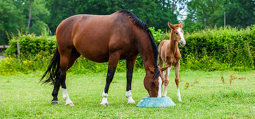 A ration for a mare and foal in a field