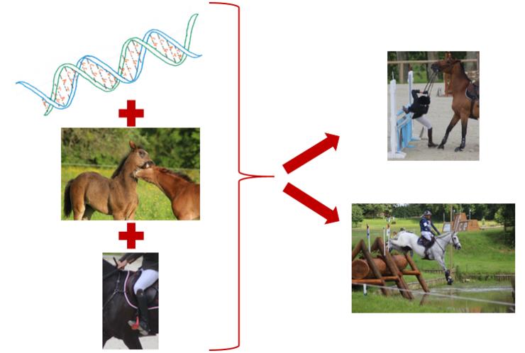 Effets génétiques et environnementaux