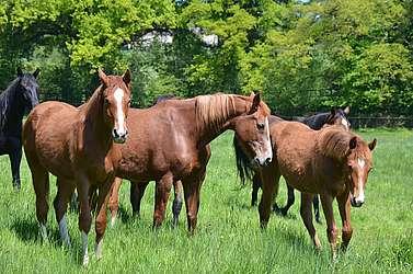 éducation jeune cheval