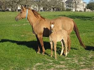 tempérament du cheval