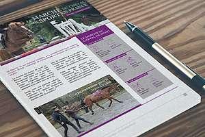 Le marché du cheval de sport en France