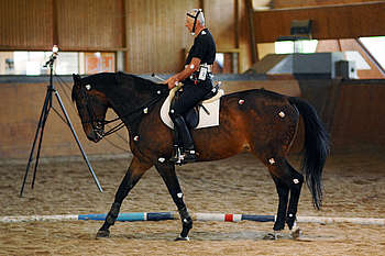 Cheval et son cavalier équipés d'électrodes de surface pour une étude biomécanique