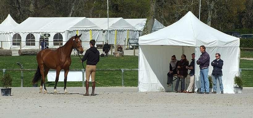 Stud-book : présentation d'un cheval en concours de modèle et allures