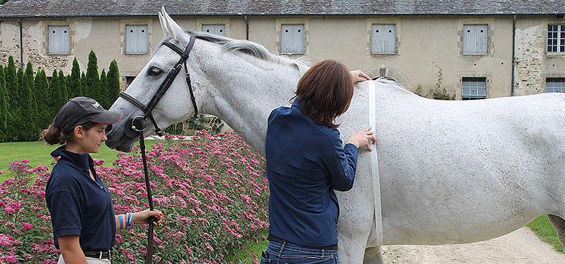 Estimation du poids d'un cheval de sang avec un ruban barymétrique
