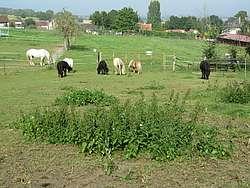 Prairie dégradée avec plantes indésirables