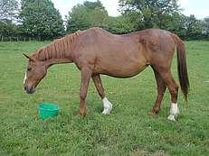 gestion pratique du vieux cheval