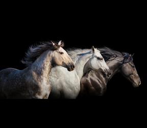 La médiathèque du cheval