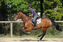 Impulsion et équilibre élémentaires du jeune cheval dont l'allure et la direction commencent à être contrôlables © A. Laurioux
