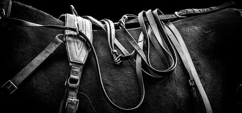 Attelage harnais sur cheval