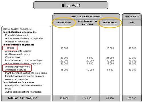 Bilan comptable : les actifs