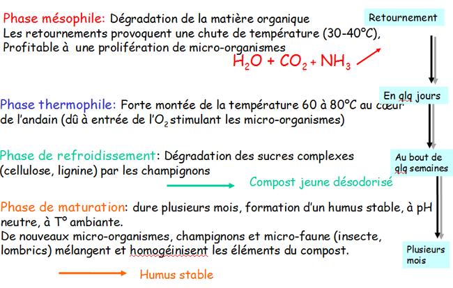 Les 4 phases du processus de compostage (selon Hacala et al 1999)