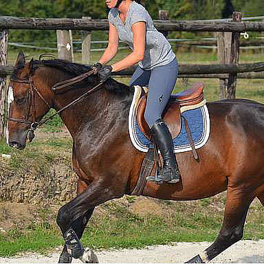 Directory of cantering / galloping sessions