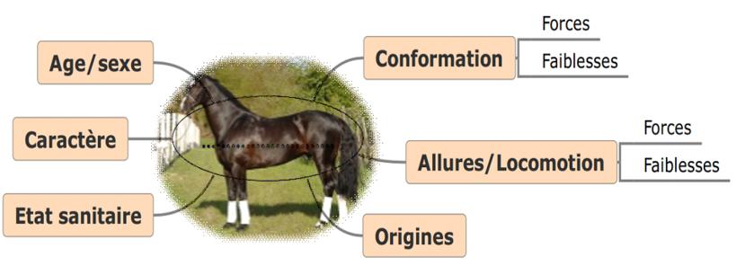 Figure 1 : Positionnement du cheval dans sa globalité