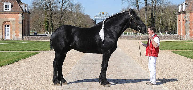 Appreciation d'un cheval au modèle