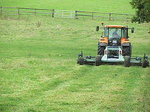 Broyage après le passage des bovins