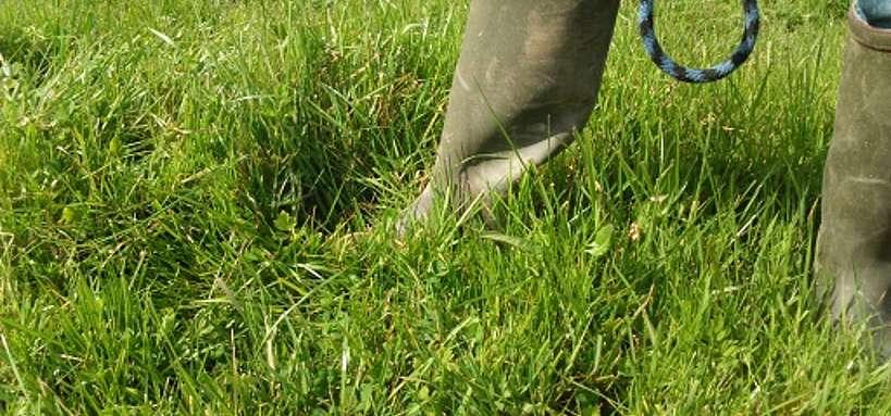 Valorisation de l'herbe, hauteur 12 cm