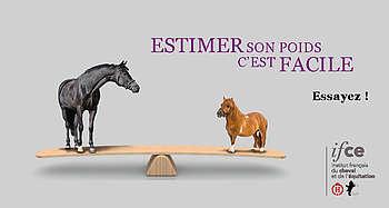 Calculez le poids de votre cheval