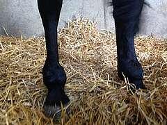 maladies du vieux cheval