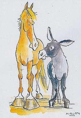 spécificités du pied de l'âne