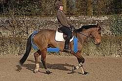 Le cheval qui ralentit son allure pour passer à l'allure du pas est obligé d'engager ses postérieurs, donc de contracter ses abdominaux et  ilio-psoas.