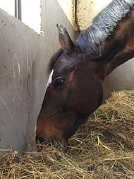 am/éliore la digestion et le bien-/être des animaux Filet /à foin//herbe//paille//nourriture pour chevaux pour une alimentation adapt/ée /à l/'esp/èce violet