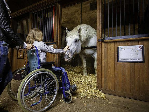 Enfant en fauteuil roulant caressant un percheron