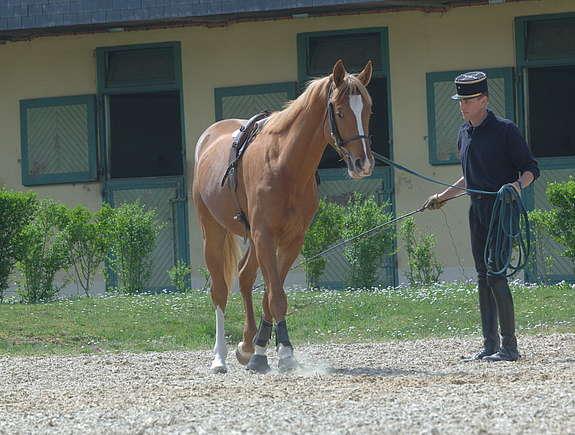 Ecuyer du Cadre Noir de saumur travaillant son cheval à la longe © A. Laurioux