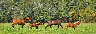 Troupeau de chevaux au pré