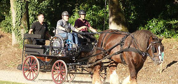 médiation équine ou équitation adaptée : pratique de l'attelage en fauteuil roulant