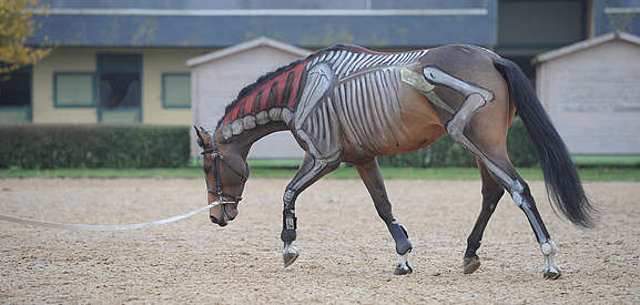 horse body painting